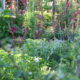 Nutzgarten Gemüsegarten