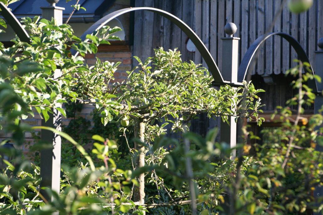 Nutzgarten Spalierbaum Apfelbaum