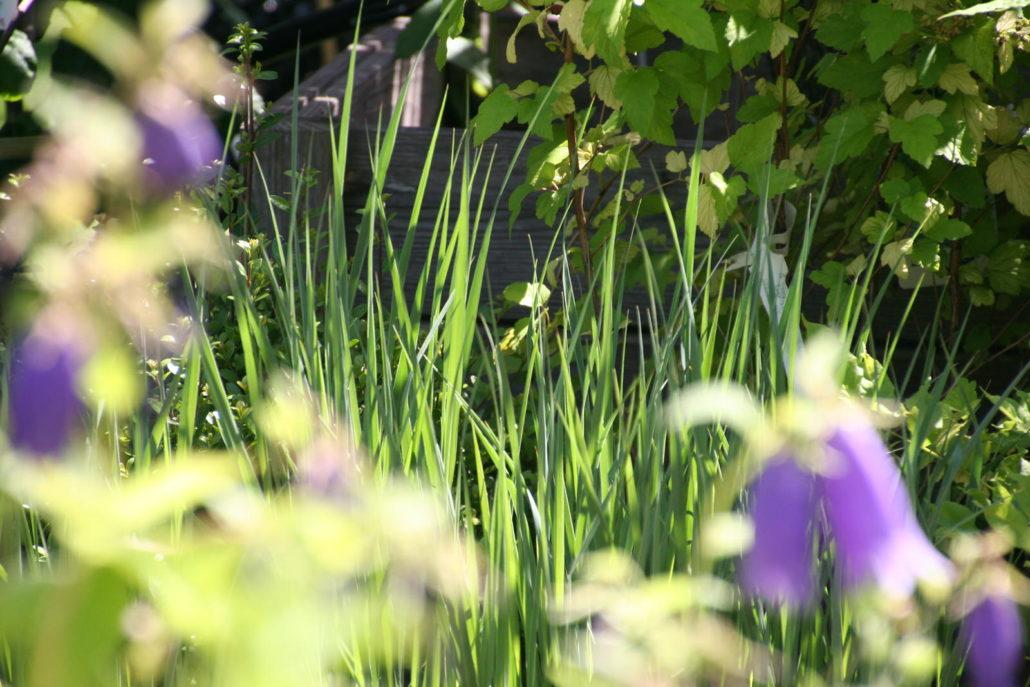 Garten Stauden Gräser