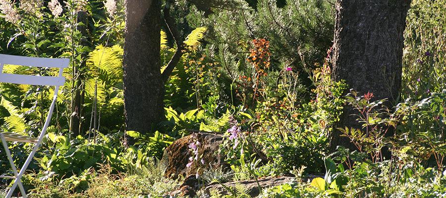 Baum Pflanzbeet halbschattig