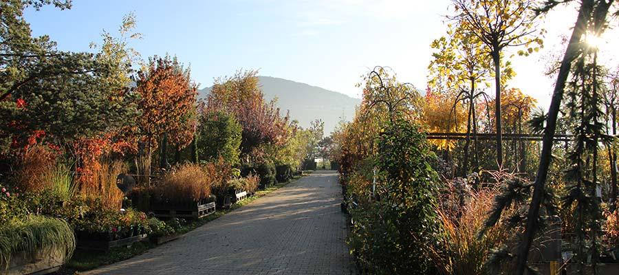 alex gartenbau baumelei Herbst