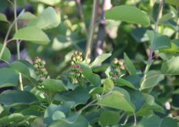 Obstbäume - Beeren - Nüsse