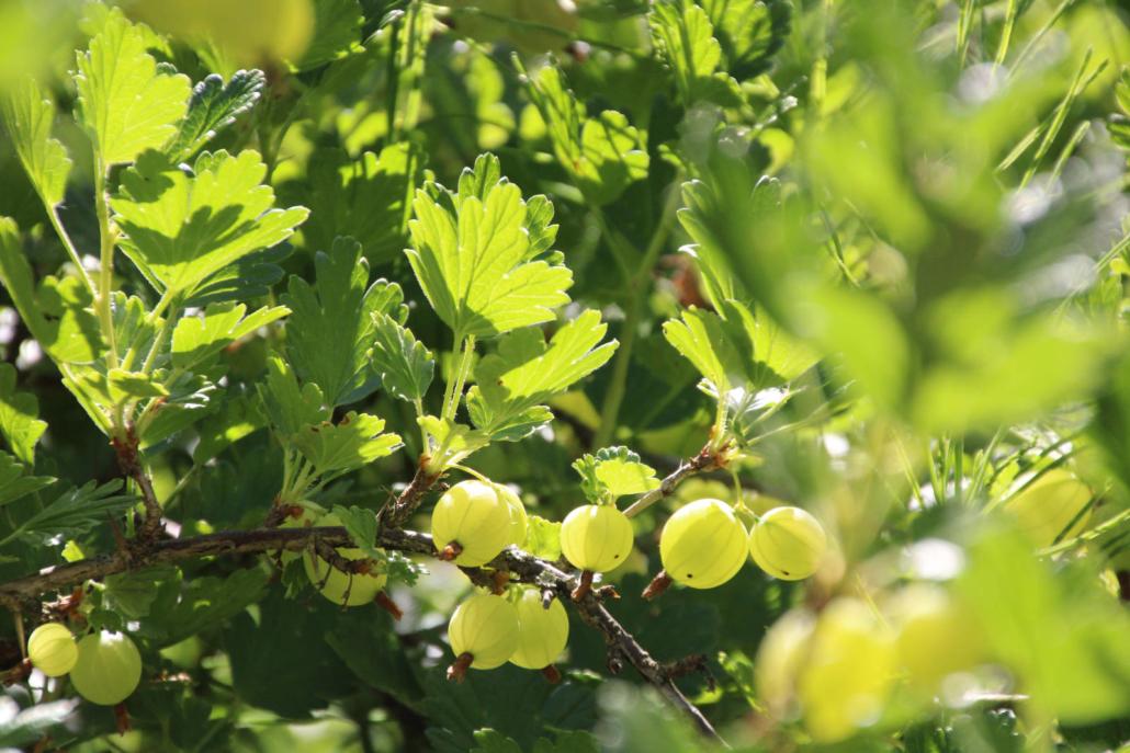 Sortiment Obst Beeren